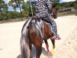 new_spirit_farm_horses42