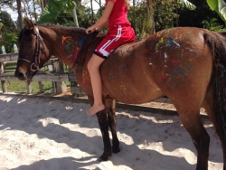 new_spirit_farm_horses43