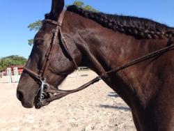 new_spirit_farm_horses50