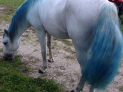 new_spirit_farm_horses53