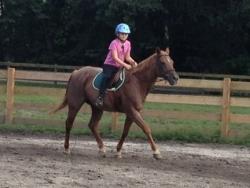 new_spirit_farm_horses54