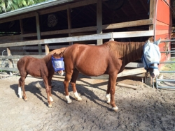 new_spirit_farm_horses57