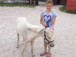 new_spirit_farm_horses61