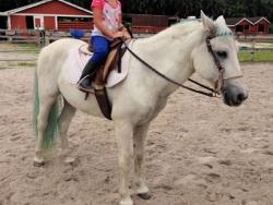 new_spirit_farm_horses63