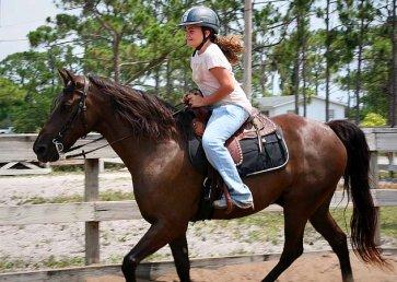 new_spirit_farm_horses11