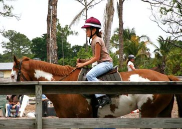new_spirit_farm_horses16