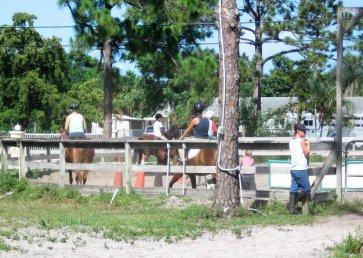 new_spirit_farm_horses19