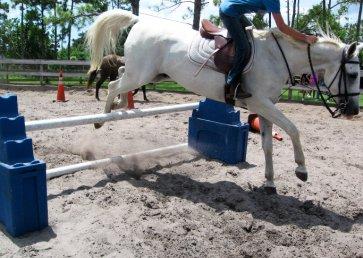 new_spirit_farm_horses22