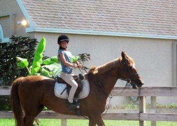 new_spirit_farm_horses24