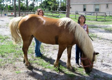 new_spirit_farm_horses30