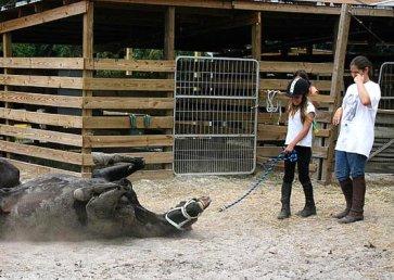 new_spirit_farm_horses32