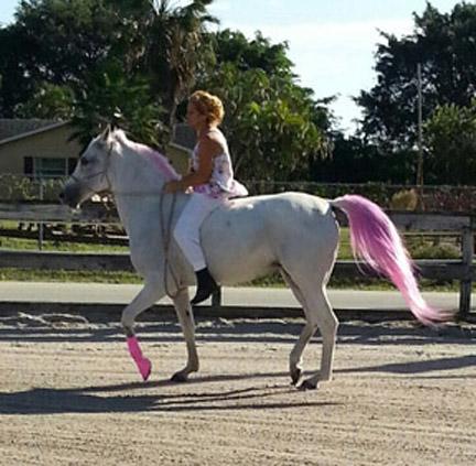 new_spirit_farm_horses39
