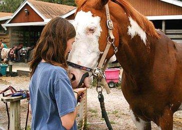 new_spirit_farm_horses4