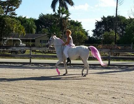 new_spirit_farm_horses41