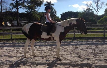 new_spirit_farm_horses55