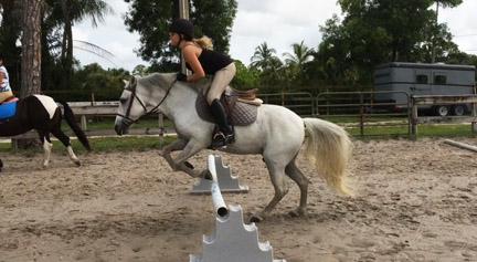 new_spirit_farm_horses58
