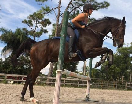 new_spirit_farm_horses65