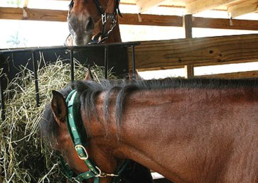 new_spirit_farm_horses8