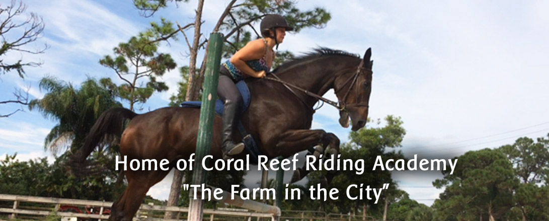 coral_reef_riding_florida